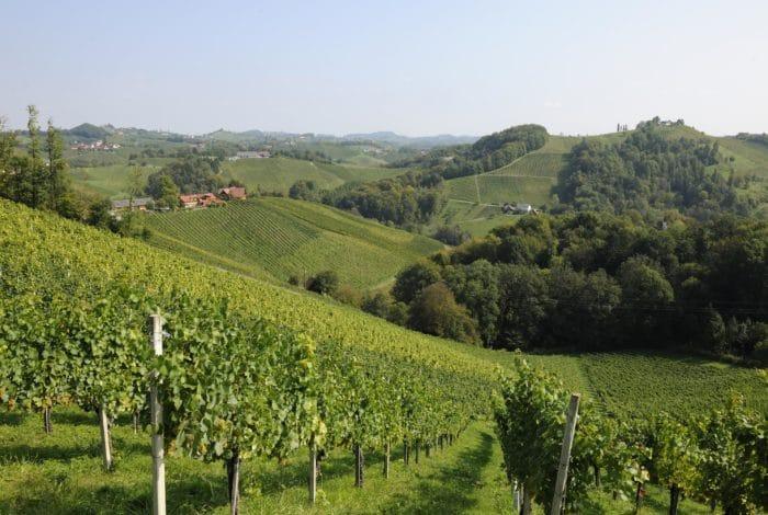 Südsteirische Weinstrasse Weinberg